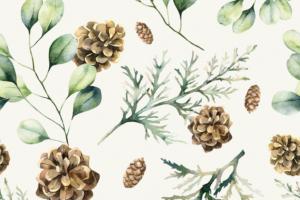 Tricot katoen stof, dennenappels met takjes, offwhite/groen/bruin. Q5550